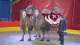 Romantik-Circus Renz noch bis 25. September in Nußloch zu Gast