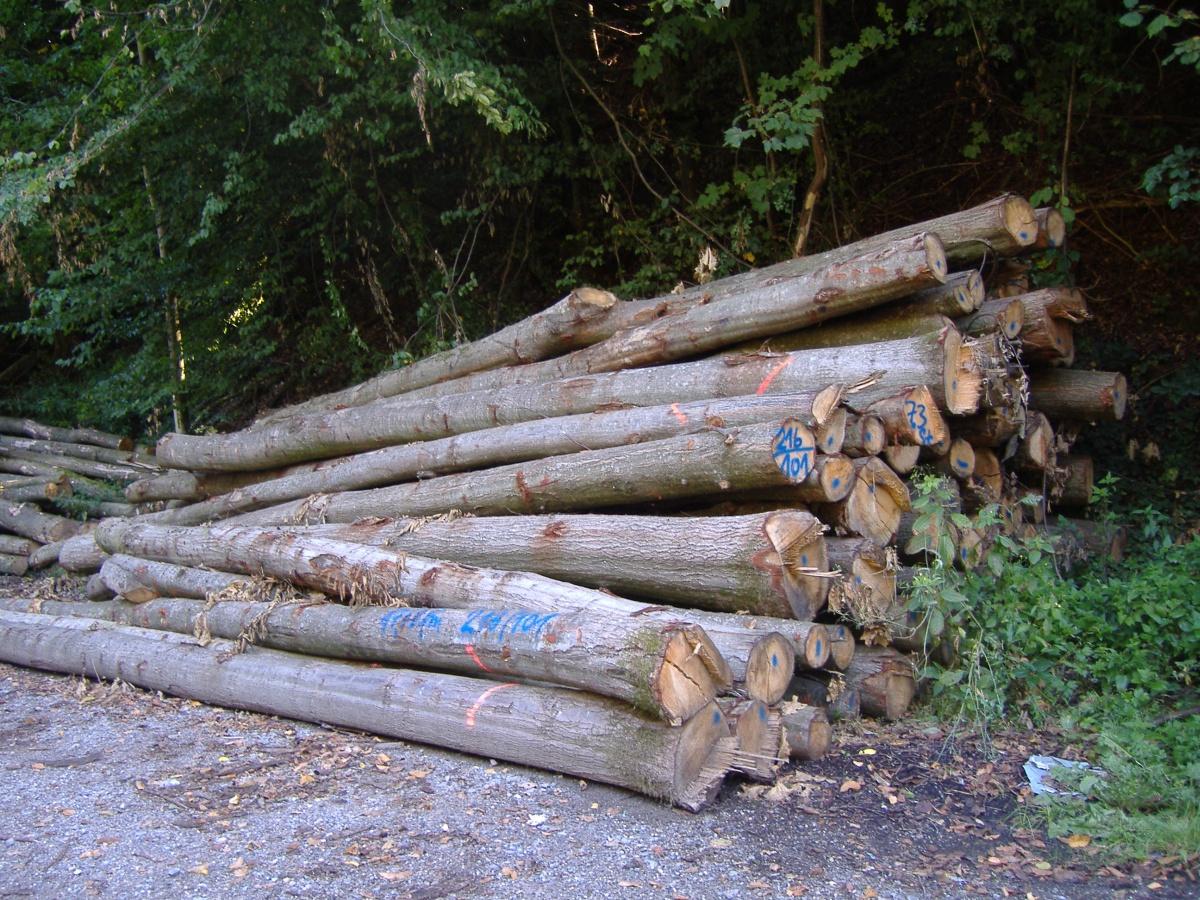 kreisforstamt brennholz weiterhin stark nachgefragt preise bleiben stabil leimen lokal. Black Bedroom Furniture Sets. Home Design Ideas