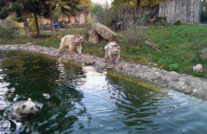 Uschi(Wasser), Benni und Gudrun (rechts)