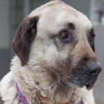 Nach nur 2 Wochen zurück im Tierheim - </br>Wieviel Eingewöhnungszeit braucht ein Hund?