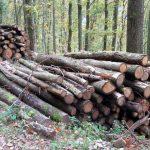 Zusammenarbeit: Leimen und Nußloch bewirtschaften Forste gemeinsam