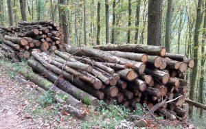 8092-eiche-brennholz