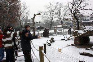 8203-winter-im-zoo