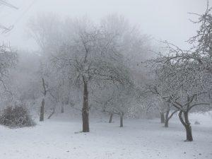 8335-winter-schnee-impressionen-1