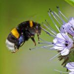 Zum Schutz von Pflanzen und Tieren: Heute beginnt die gesetzliche Vegetationsperiode