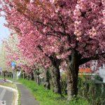 Frühling und Sonne satt am Wochenende - Biergarten-Ansturm erwartet