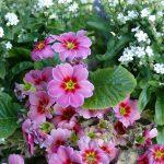 Sandhäuser Blumenschmuck-Wettbewerb - Dienstag Anmeldeschluß