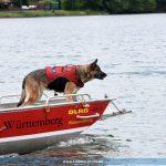 Prüfung von Rettungshundeteams