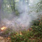 Viel zu wenig Regen: </br>Höchste Waldbrand-Gefahrenstufe erreicht