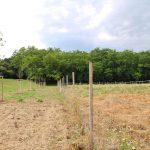 Wiederaufforstung SVS: Neue Bäume und Sträucher waldnah gepflanzt
