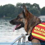 Gemeinsames Rettungshundetraining von DLRG Leimen und DRK Mannheim