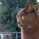 Wann ist eine Katze ein Fundtier? </br>Sonntag Bücherflohmarkt bei Tom-Tatze