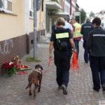 Tötungsdelikt in Leimen: Spurensuche geht weiter – Polizeihund im Einsatz