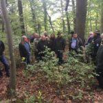Gut besuchte Waldbegehung – Leimener Gemeinderat informierte sich vor Ort