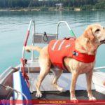 Prüfung von Rettungshundeteams der DLRG Leimen