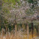Zum Schutz von Pflanzen und Tieren:  Am 1. März beginnt die Vegetationsperiode