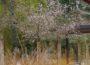 Ein Leimener Blütentraum auch im Winter: Die Japanische Winterkirsche