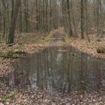 Viel Arbeit für die Kreisförster: Feuchte Witterung erschwert Waldpflege