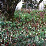 Beginn der Vegetationsperiode - Zurückschneiden von Bäumen und Sträuchern