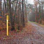 Ab Anfang Februar: Baumfällarbeiten entlang der Erdgasleitungen in Sandhausen