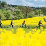 Tourismus: Ein weiterer Sterne-Radweg führt durch den Rhein-Neckar-Kreis