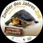 Kaum noch in freier Wildbahn: Scharnierschildkröte ist Zootier des Jahres 2018