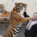 Sibirische Tiger im Circus Weisheit: Trainer Prehn fressen sie sogar aus der Hand