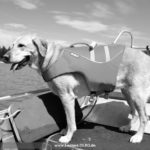 Trauriger Abschied vom Leimener Wasserrettungshund FLY