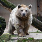 Mit Online-Ticket in den Zoo - Schneller ins Erlebnis starten