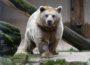 Mit Online-Ticket in den Zoo – Schneller ins Erlebnis starten