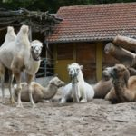 Rechtzeitig buchen: Oma-Opa-Enkel-Tag im Zoo Heidelberg