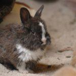 Die Zootiere freuen sich auf die Ostergeschenke der Kinder