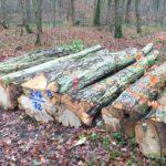 Perfektes Winterwetter! </br>Holz-Abtransport aus den Wäldern läuft