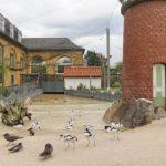 Von Heidelberg ans Meer in den Kurzurlaub: Küstenpanorama im Zoo