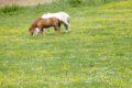 """Mehrere Pferdeschändungen in der Region – Ermittlungsgruppe """"Koppel"""" eingerichtet"""