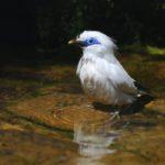 Zoo Heidelberg initiiert Silent Forest-Kampagne für asiatische Singvögel