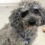 Armer Dan: Ein Hundeschicksal, das anders hätte laufen sollen