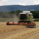 Getreideernte läuft bereits – 6 Wochen früher als normal