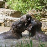 Sommerhitze kein Problem für die Zootiere