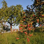Fachwartekurs für Obst und Garten 2020/21