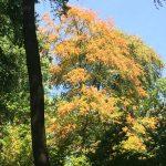Rekordsommer schadet dem Wald – Förster bereiten ihn auf Klimawandel vor