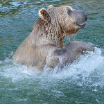 Hitzewelle hat Zoo stark zugesetzt - Weniger Besucher in den Sommerferien