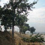 Das Straßenbauamt warnt: Erhöhte Gefahr durch Astbruch an Bäumen