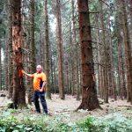 Nadelwälder im Kreis leiden unter Borkenkäfer-Plage - Schon 15.000 Kubikmeter Käferholz