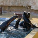 Schnupper-Workshops für Kinder im Zoo – es gibt noch freie Plätze