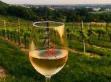 Samstag: Nachhaltigen Weinanbau auf dem Nußlocher Wilhelmsberg erleben