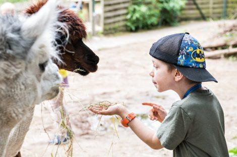 Buntes Herbstprogramm der Zooschule an den Brückentagen 4./5. Oktober