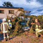 Nußloch: Sturm warf Baum um - Direkt auf parkenden PKW