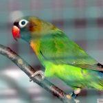 Herbstfest der Nußlocher Vogelzüchter: </br>Bunte Vielfalt begeistere Besucher