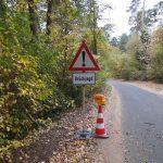 Herbstzeit ist Drückjagdzeit: Zur Vermeidung von Wildunfällen Fuß vom Gas